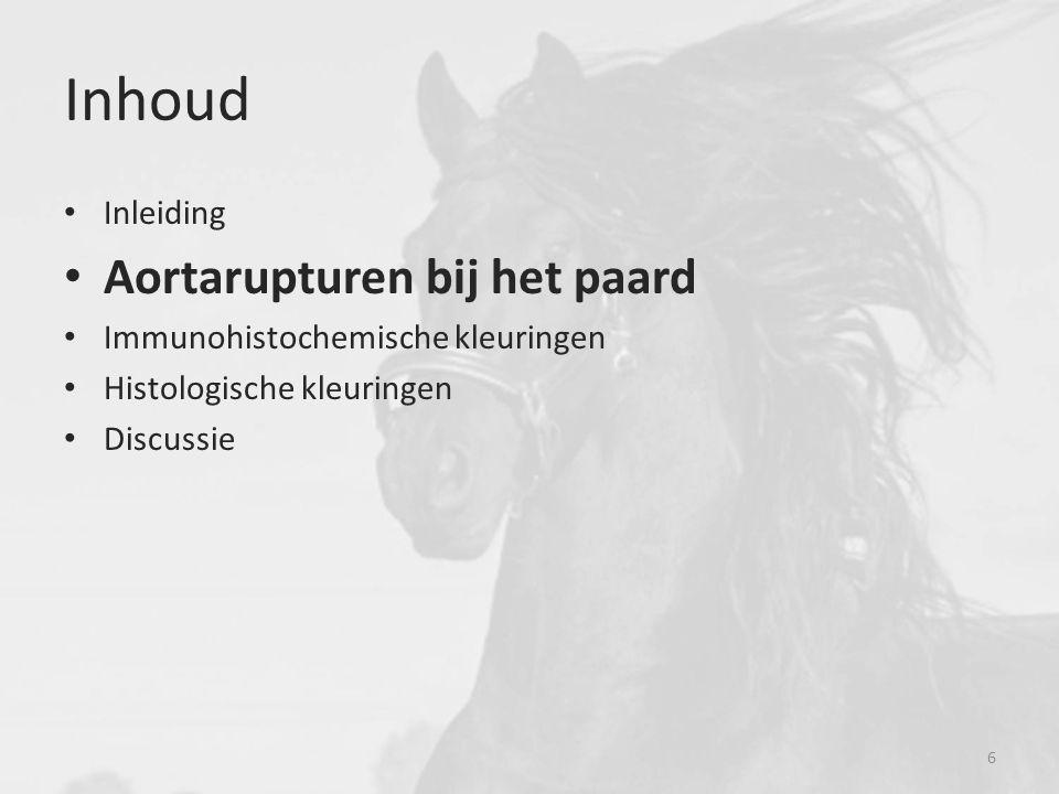 Inhoud Aortarupturen bij het paard Inleiding