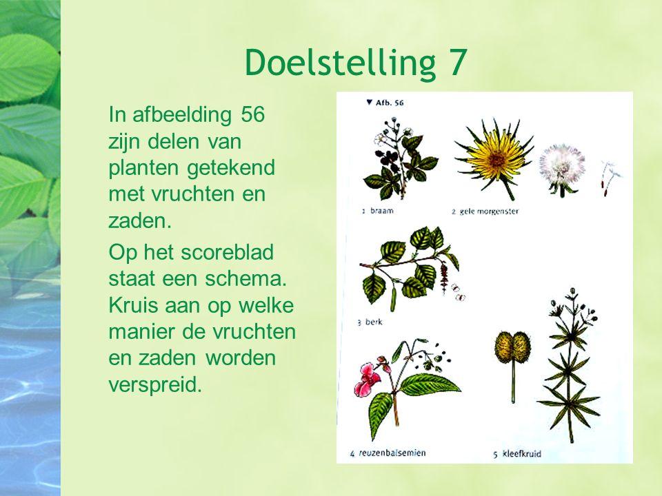 Doelstelling 7