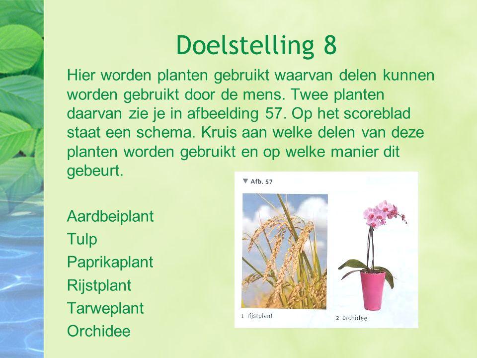 Doelstelling 8