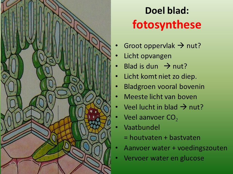 Doel blad: fotosynthese