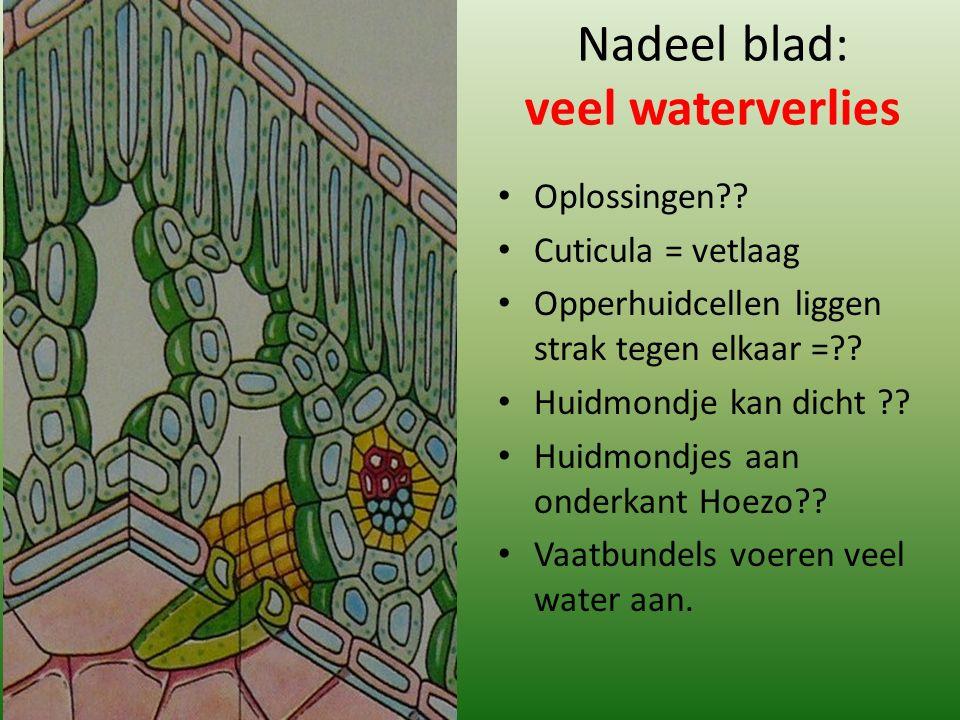 Nadeel blad: veel waterverlies