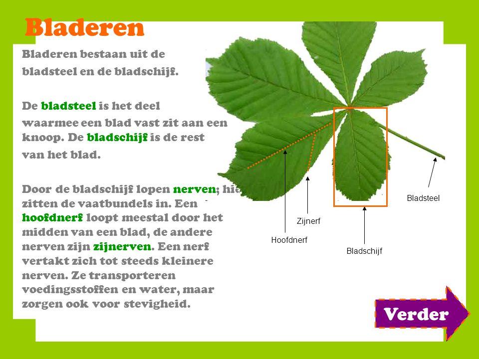 Bladeren Verder Bladeren bestaan uit de bladsteel en de bladschijf.