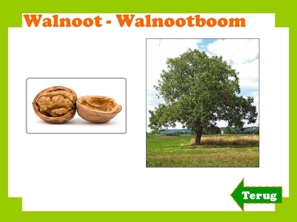 Walnoot - Walnootboom Terug