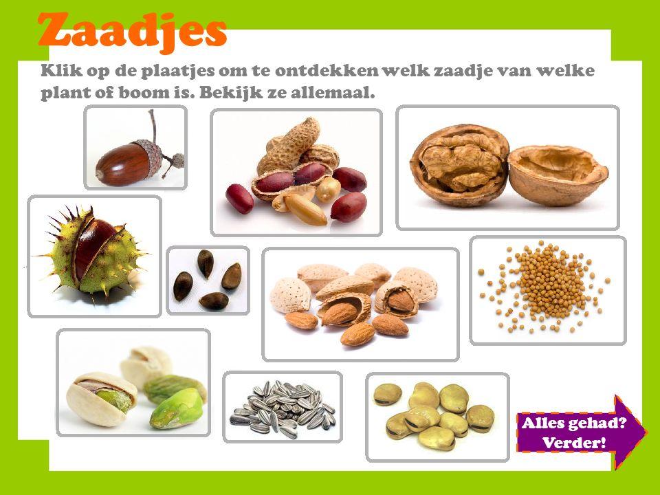 Zaadjes Klik op de plaatjes om te ontdekken welk zaadje van welke plant of boom is. Bekijk ze allemaal.