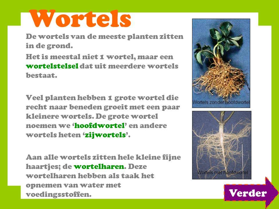 Wortels Verder De wortels van de meeste planten zitten in de grond.