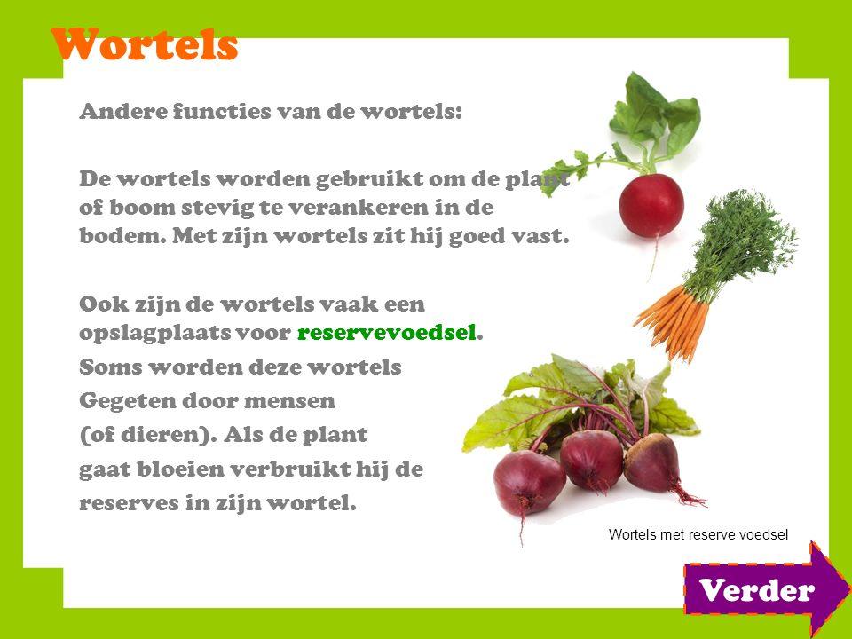 Wortels Verder Andere functies van de wortels: