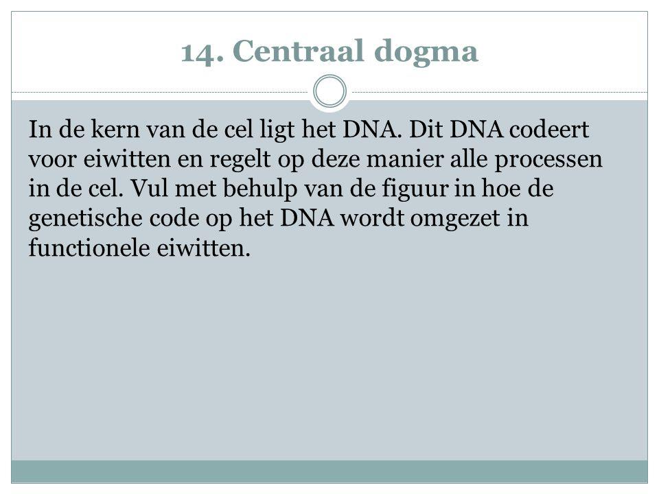 14. Centraal dogma