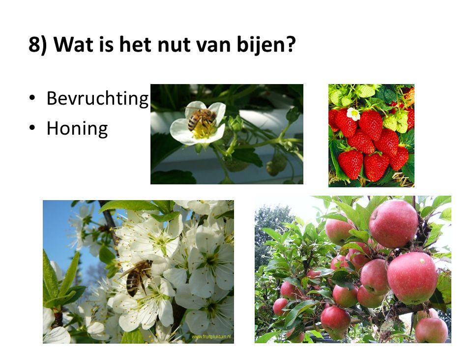 8) Wat is het nut van bijen
