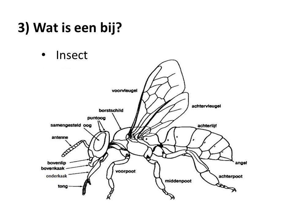 3) Wat is een bij Insect