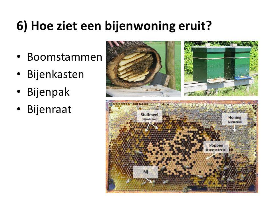 6) Hoe ziet een bijenwoning eruit