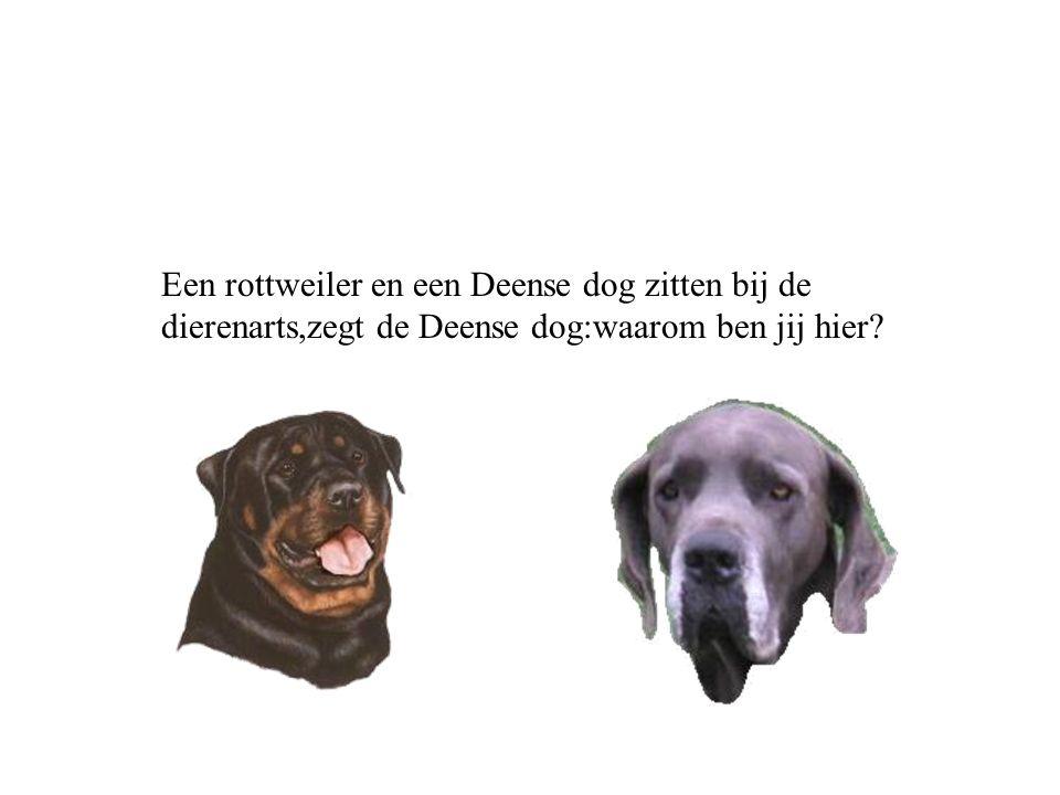 Een rottweiler en een Deense dog zitten bij de dierenarts,zegt de Deense dog:waarom ben jij hier
