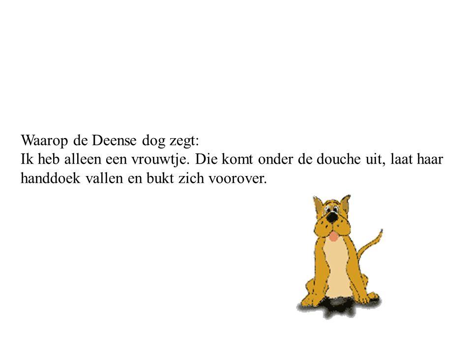 Waarop de Deense dog zegt: Ik heb alleen een vrouwtje