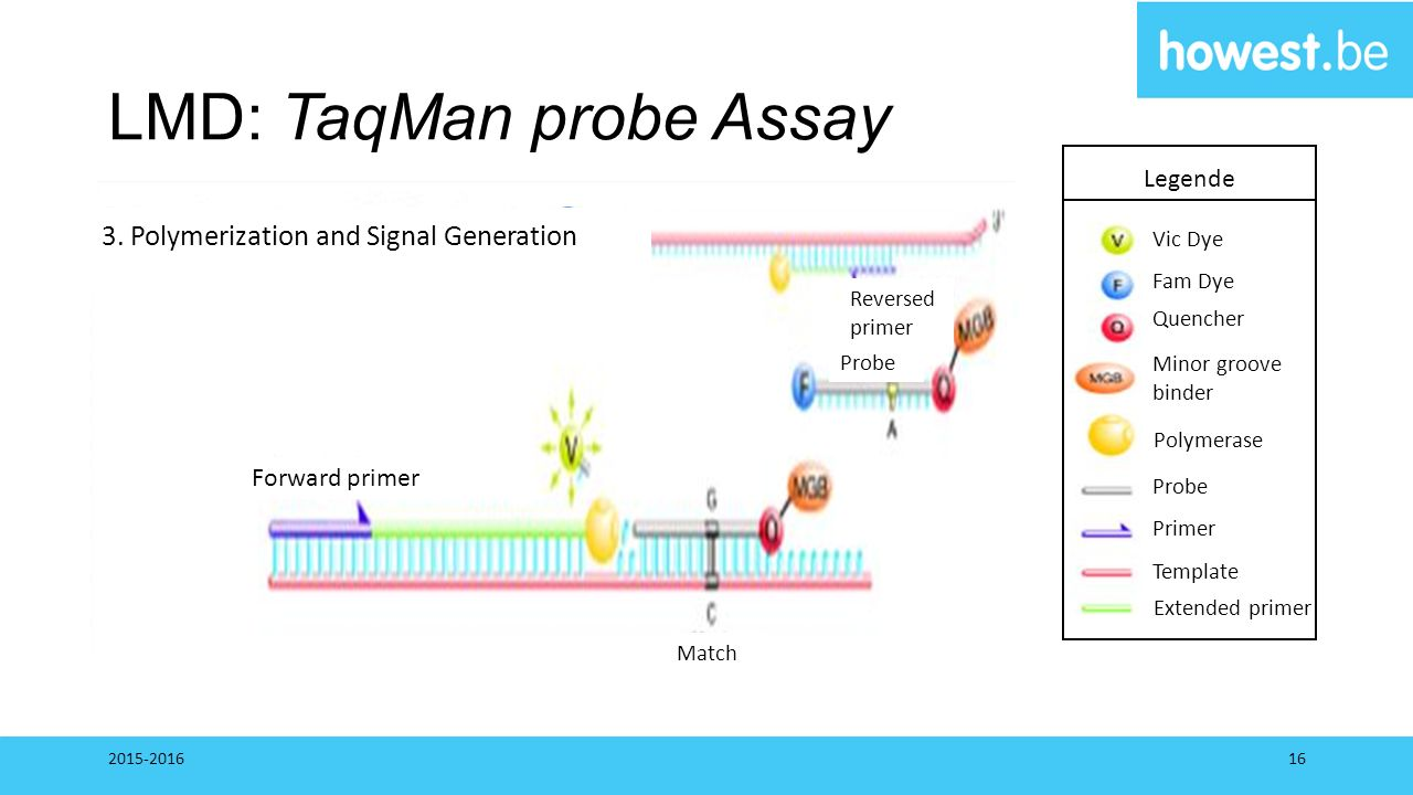 LMD: TaqMan probe Assay