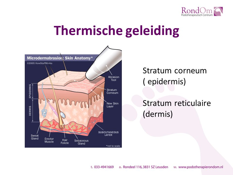Thermische geleiding Stratum corneum ( epidermis) Stratum reticulaire