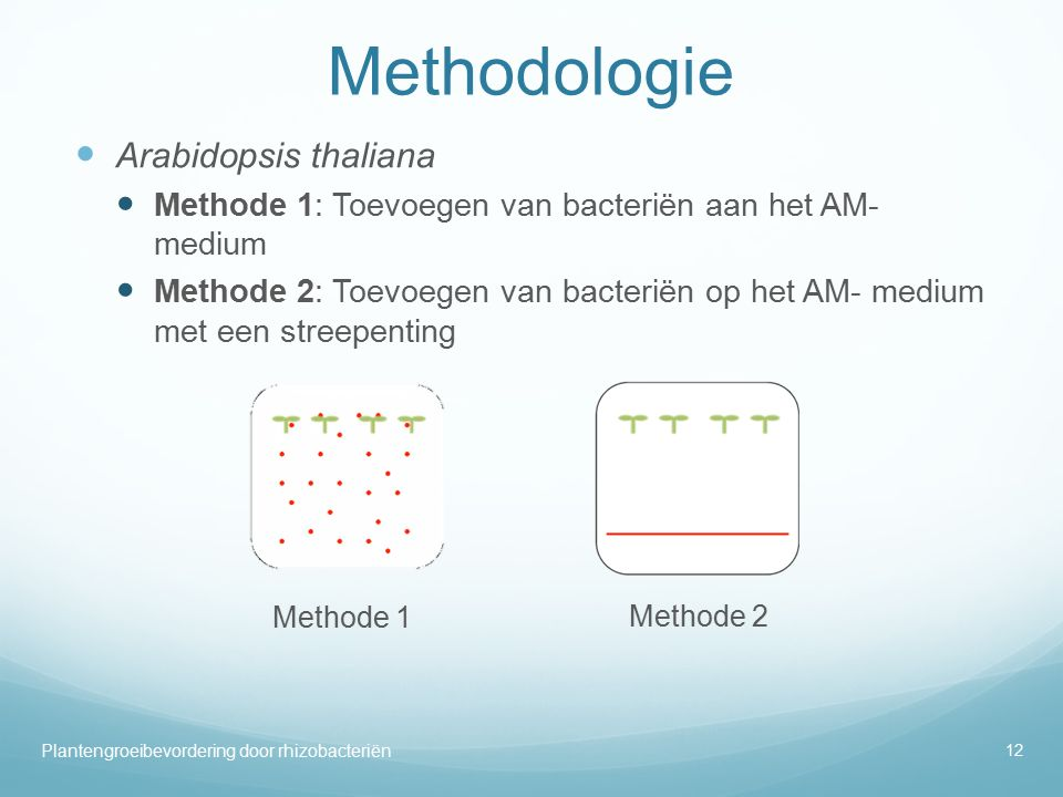 Methodologie Arabidopsis thaliana