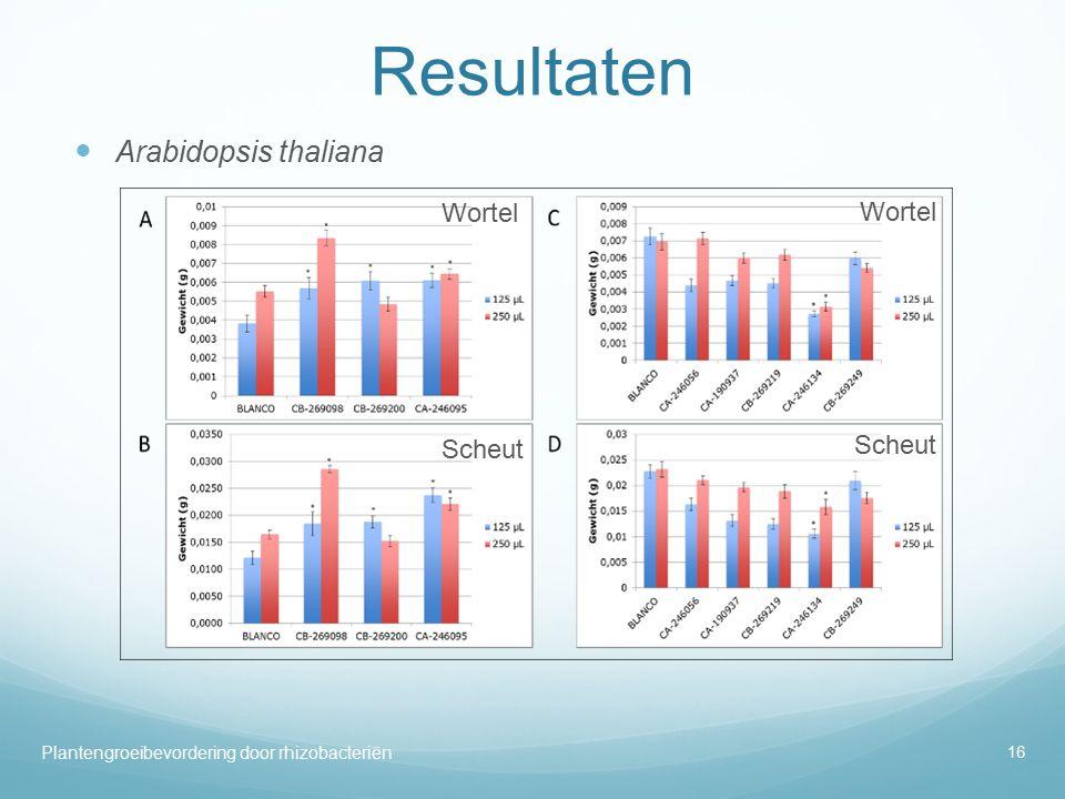 Resultaten Arabidopsis thaliana Wortel Wortel Scheut Scheut