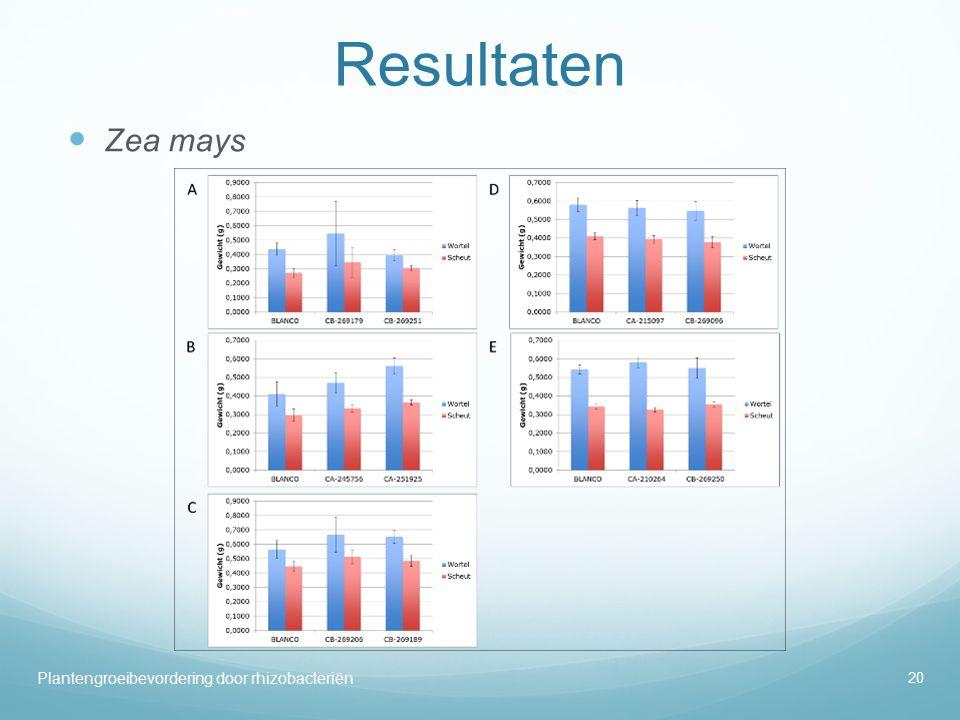Resultaten Zea mays.
