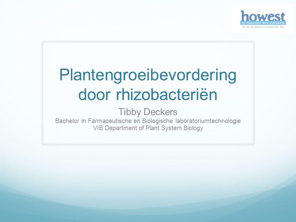 Plantengroeibevordering door rhizobacteriën