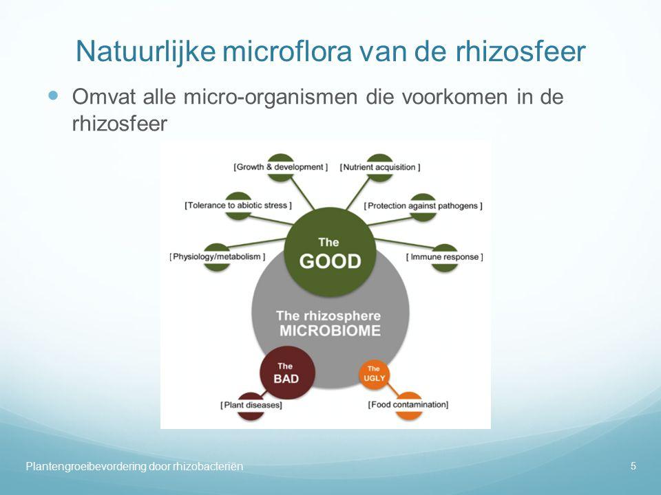 Natuurlijke microflora van de rhizosfeer