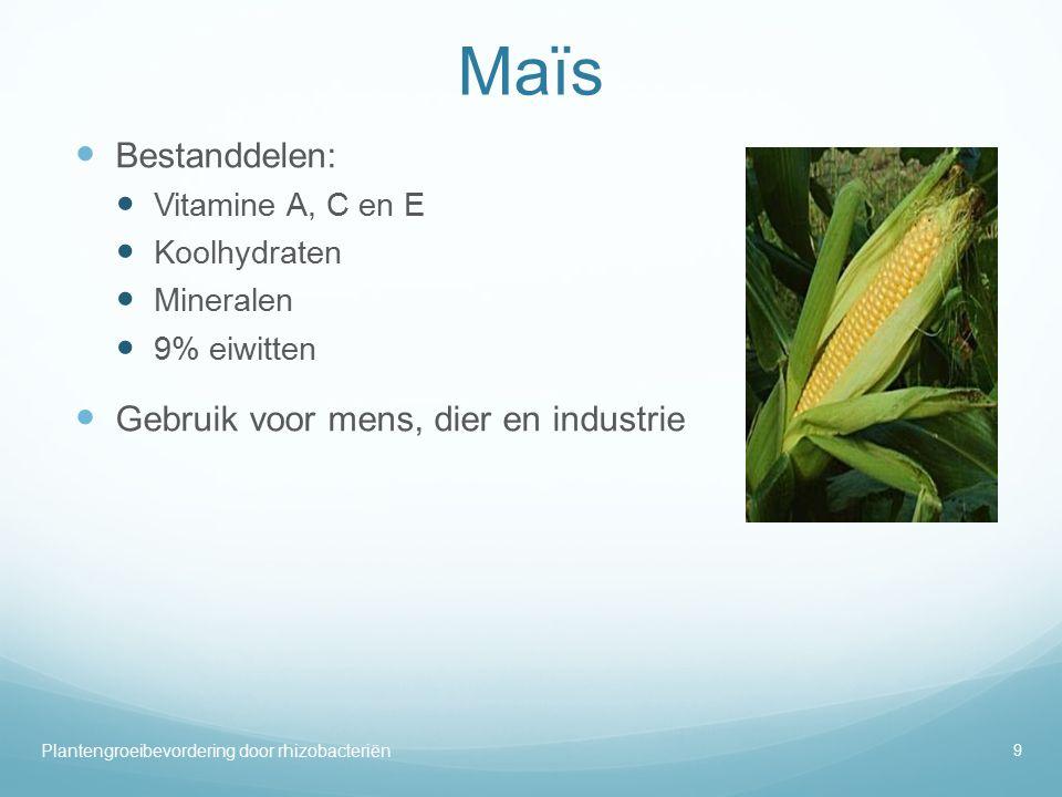 Maïs Bestanddelen: Gebruik voor mens, dier en industrie