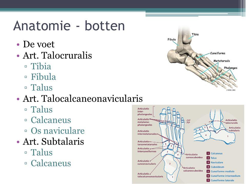 Anatomie - botten De voet Art. Talocruralis