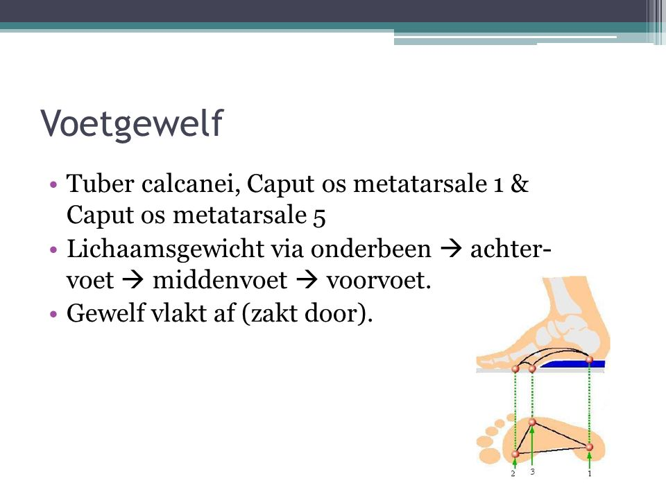 Voetgewelf Tuber calcanei, Caput os metatarsale 1 & Caput os metatarsale 5. Lichaamsgewicht via onderbeen  achter- voet  middenvoet  voorvoet.