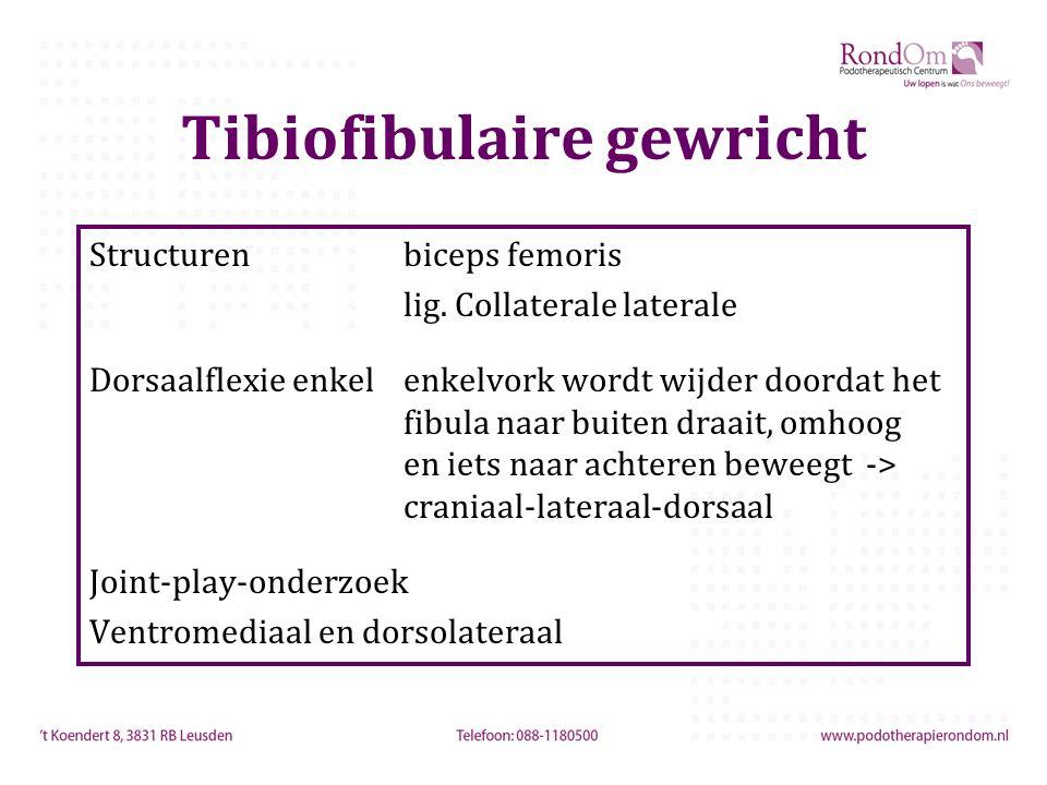 Tibiofibulaire gewricht