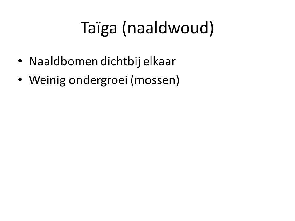 Taïga (naaldwoud) Naaldbomen dichtbij elkaar