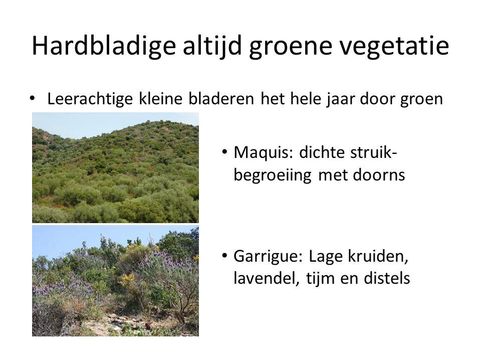 Hardbladige altijd groene vegetatie
