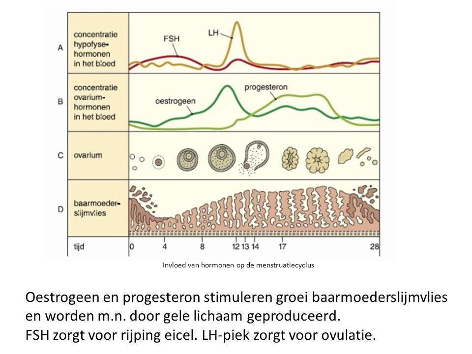 Oestrogeen en progesteron stimuleren groei baarmoederslijmvlies