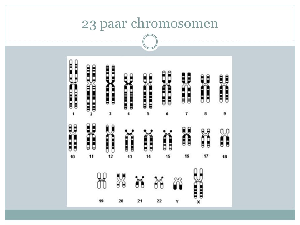 23 paar chromosomen