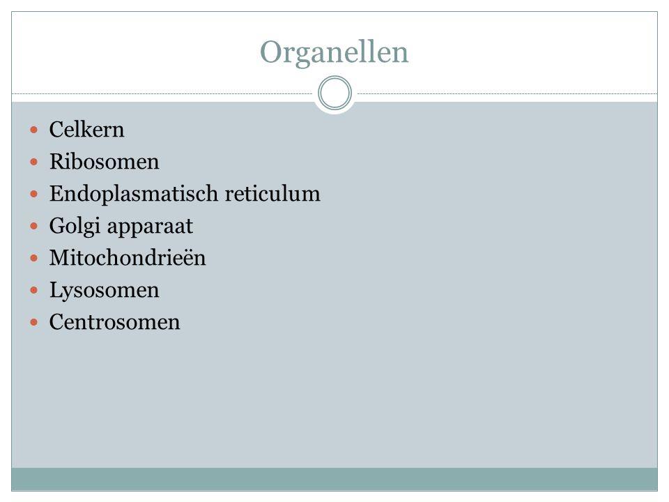 Organellen Celkern Ribosomen Endoplasmatisch reticulum Golgi apparaat