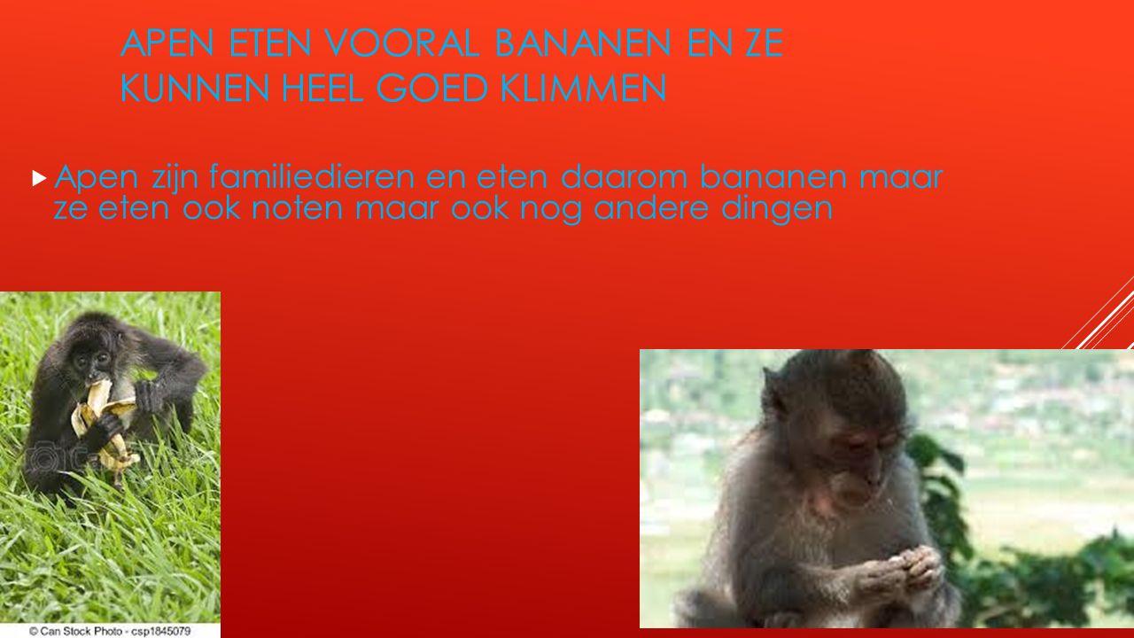 Apen eten vooral bananen en ze kunnen heel goed klimmen