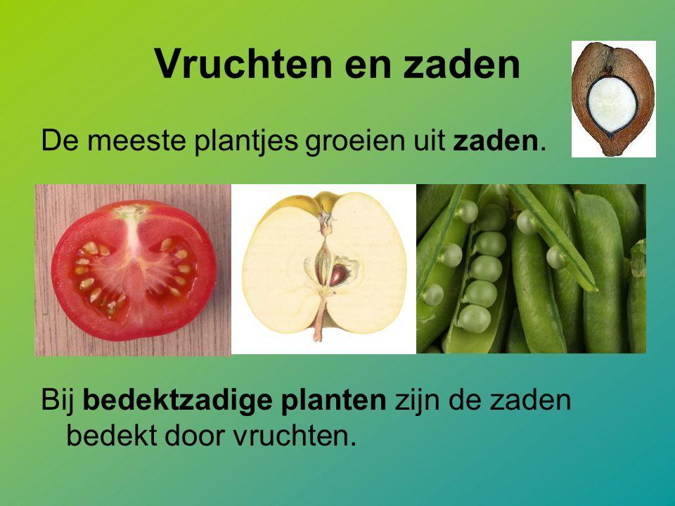 Vruchten en zaden De meeste plantjes groeien uit zaden.