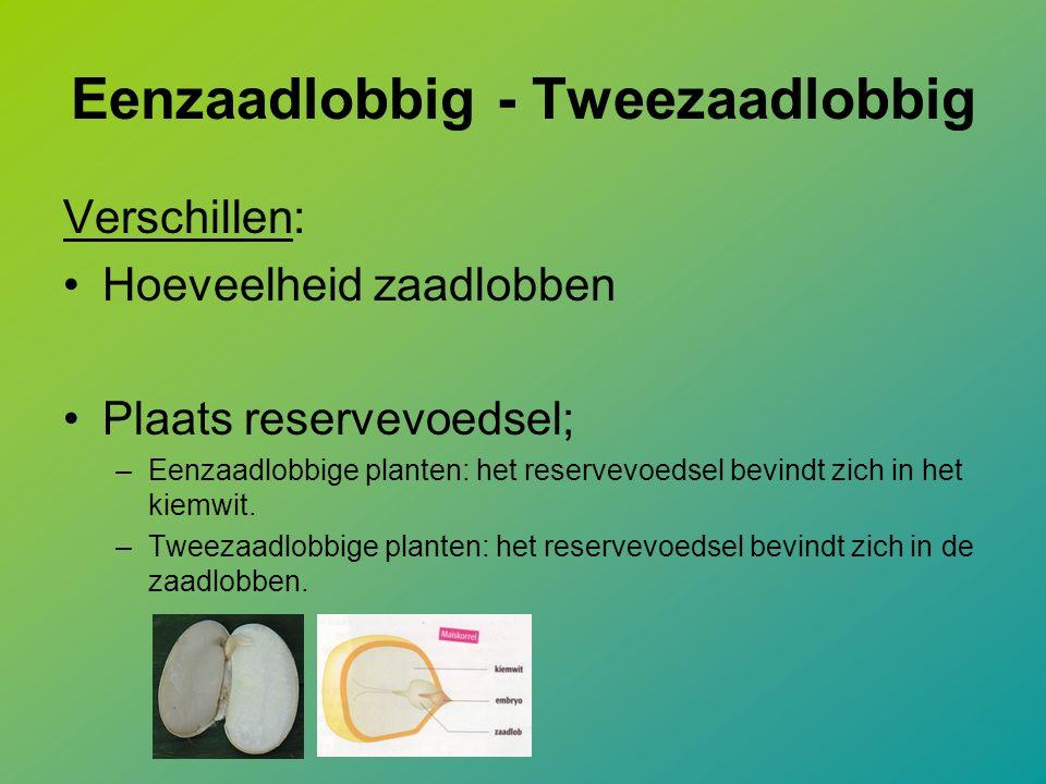 Eenzaadlobbig - Tweezaadlobbig