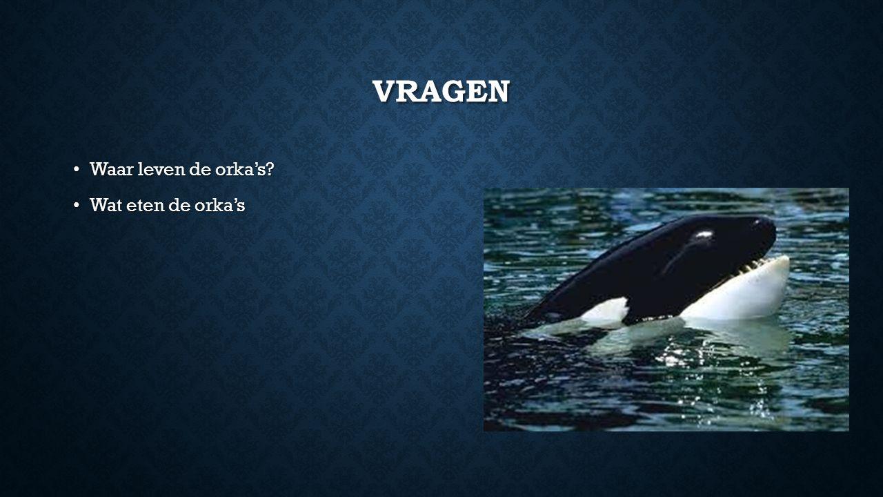 vragen Waar leven de orka's Wat eten de orka's