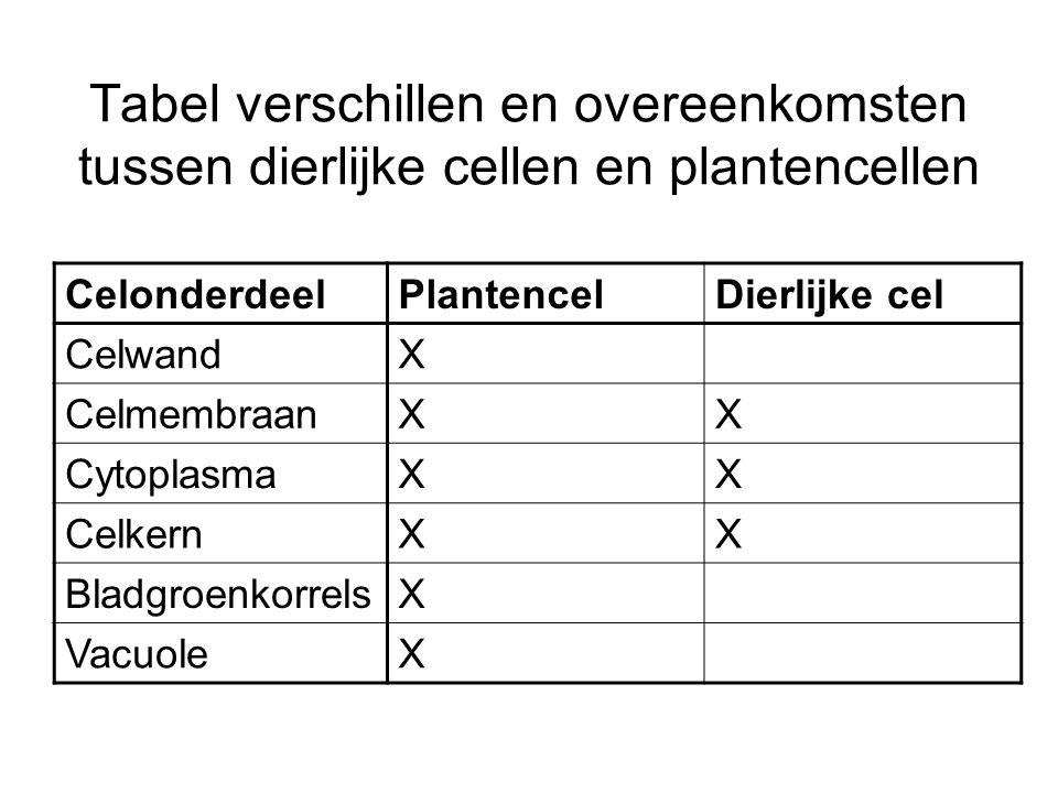 Tabel verschillen en overeenkomsten tussen dierlijke cellen en plantencellen