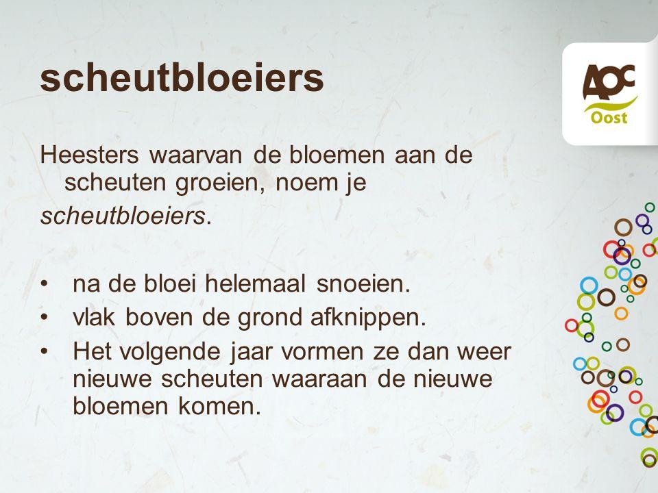 scheutbloeiers Heesters waarvan de bloemen aan de scheuten groeien, noem je. scheutbloeiers. na de bloei helemaal snoeien.