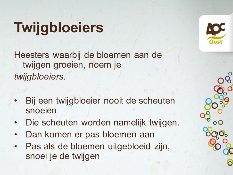 Twijgbloeiers Heesters waarbij de bloemen aan de twijgen groeien, noem je. twijgbloeiers. Bij een twijgbloeier nooit de scheuten snoeien.
