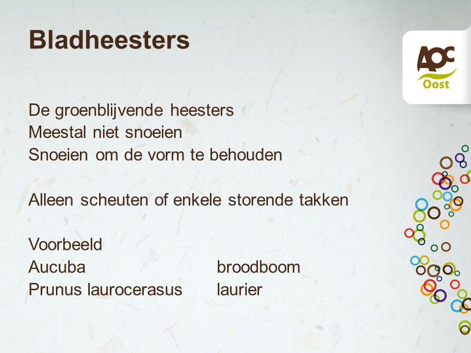 Bladheesters