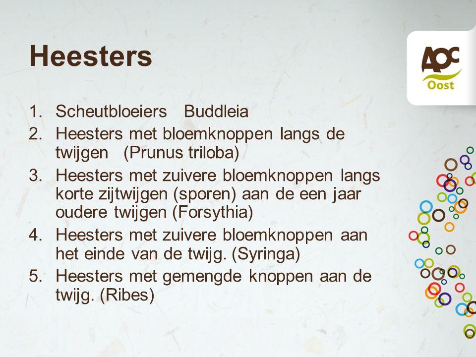 Heesters Scheutbloeiers Buddleia