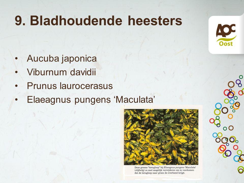 9. Bladhoudende heesters