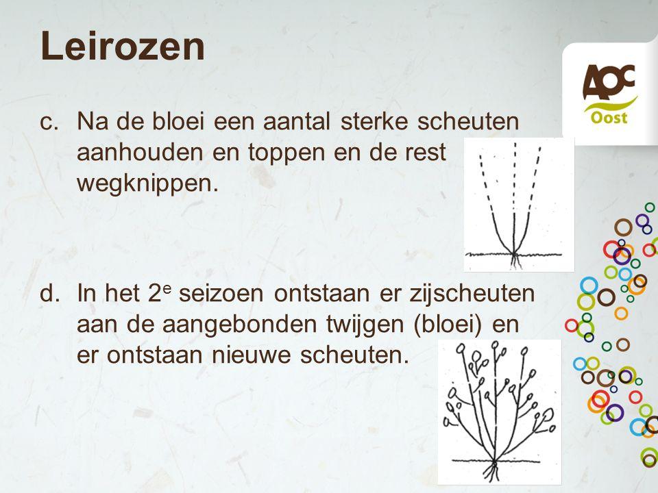 Leirozen Na de bloei een aantal sterke scheuten aanhouden en toppen en de rest wegknippen.