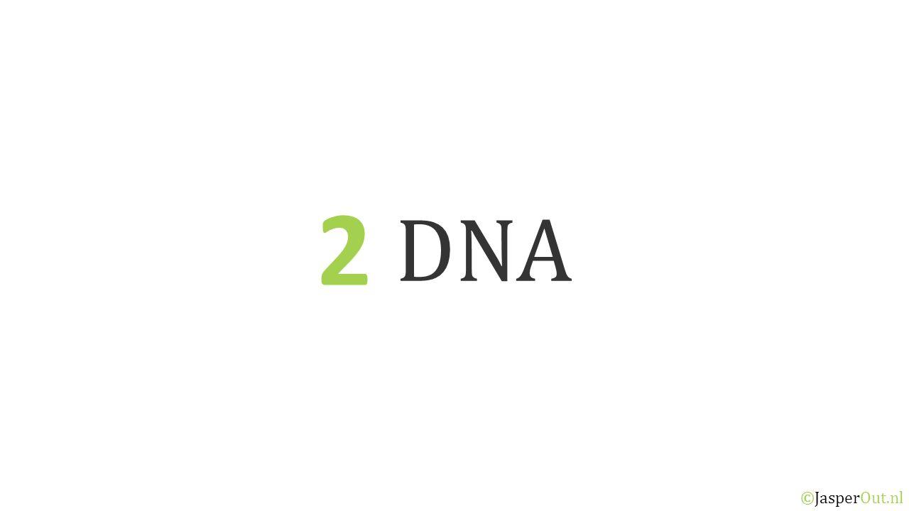 2 DNA ©JasperOut.nl