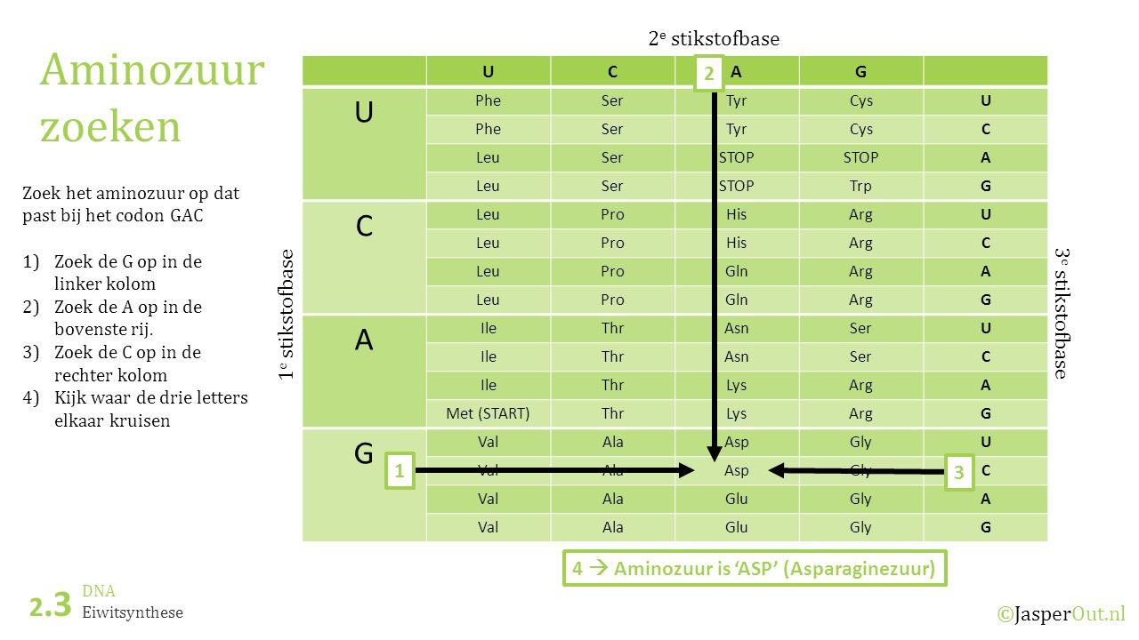 Aminozuur zoeken 2.3 2e stikstofbase 2 1e stikstofbase 3e stikstofbase