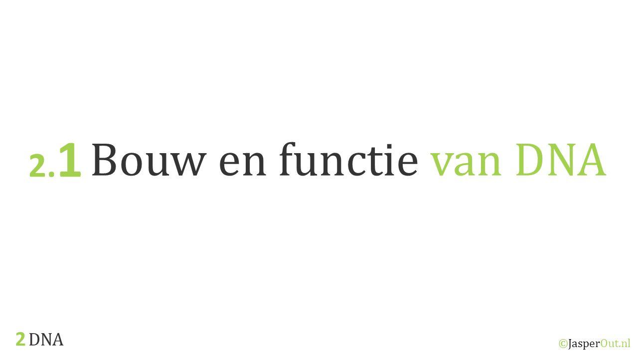 2.1 Bouw en functie van DNA 2 DNA ©JasperOut.nl
