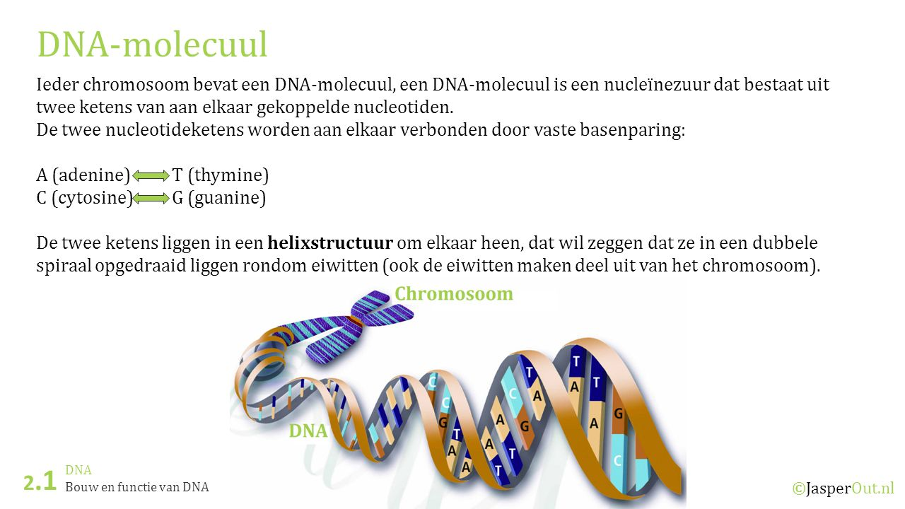 DNA-molecuul