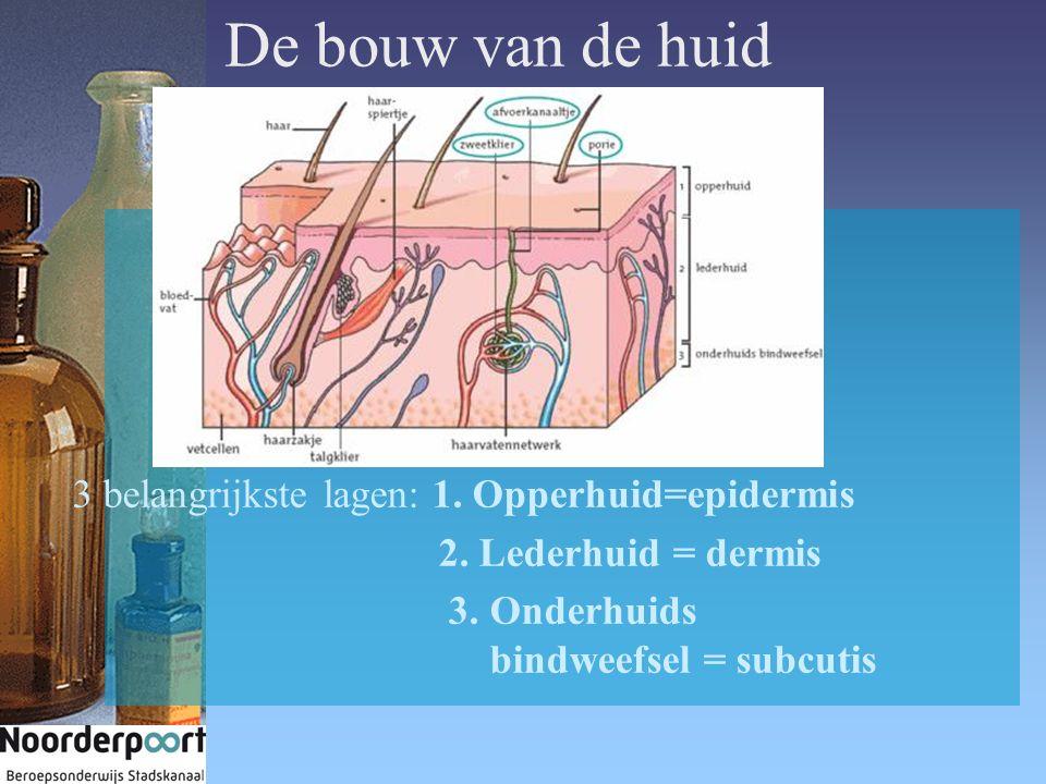 De bouw van de huid 3 belangrijkste lagen: 1. Opperhuid=epidermis 2.