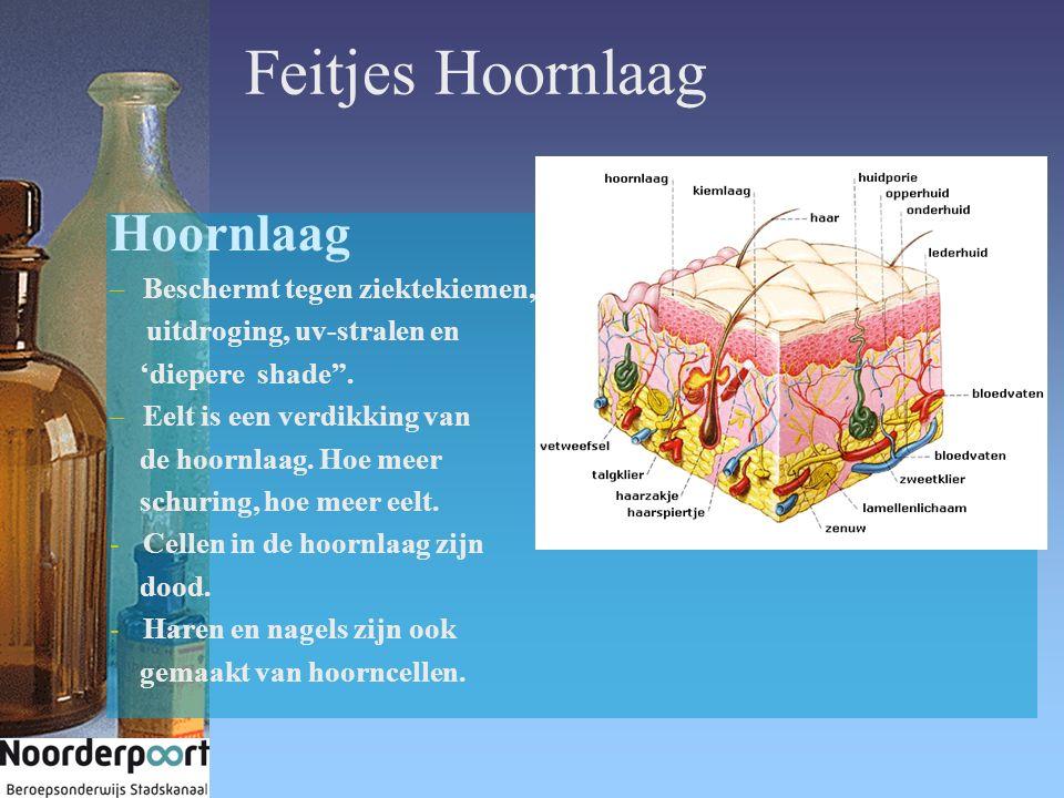 Feitjes Hoornlaag Hoornlaag Beschermt tegen ziektekiemen,
