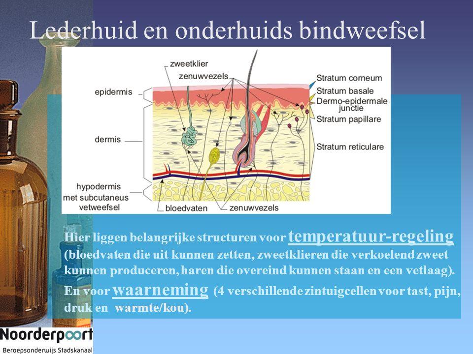Lederhuid en onderhuids bindweefsel